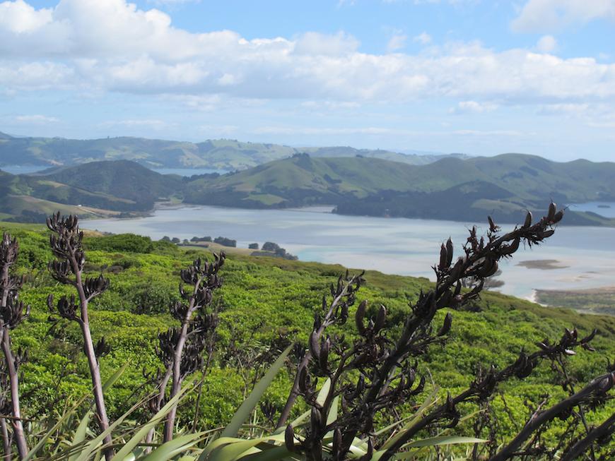 Bucket List Travel / Otago Peninsula New Zealand