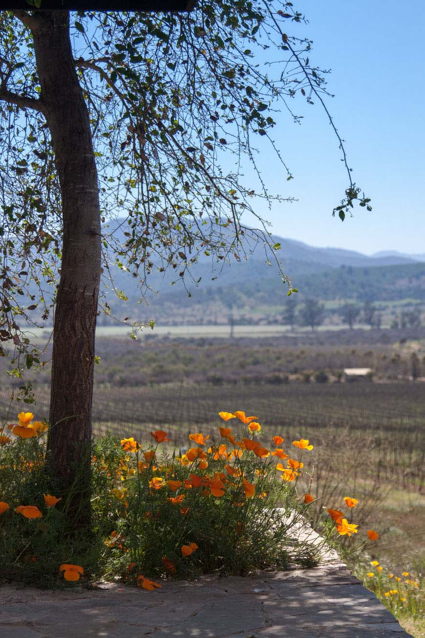 Kingston Family Vineyards - Chilean Wine Country