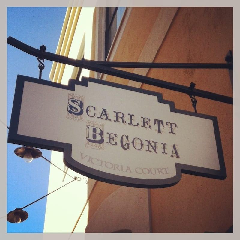 scarlett begonia